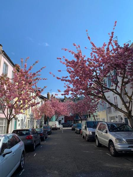 Blithfield street in the spring