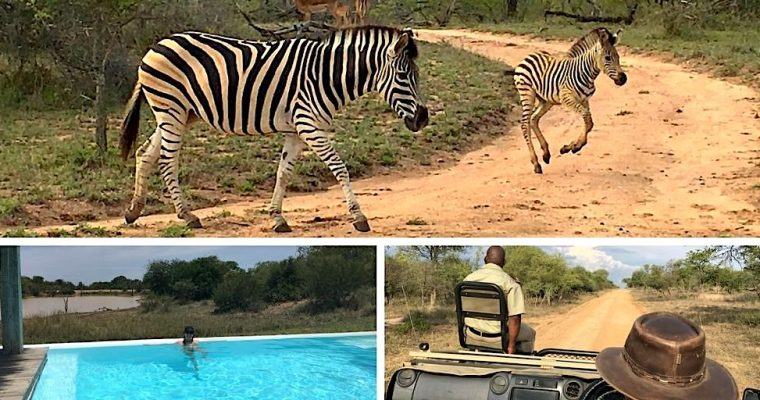 A safari in South Africa to disconnect from city life and reconnect with the natural world!