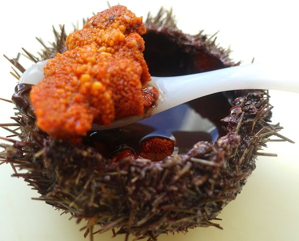 sea urchin, uni