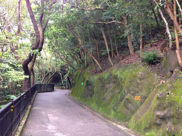 Trail in Victoria Peak