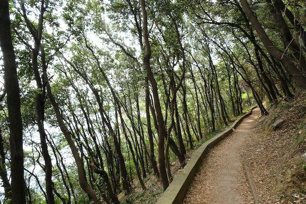 Beautiful walk between trees