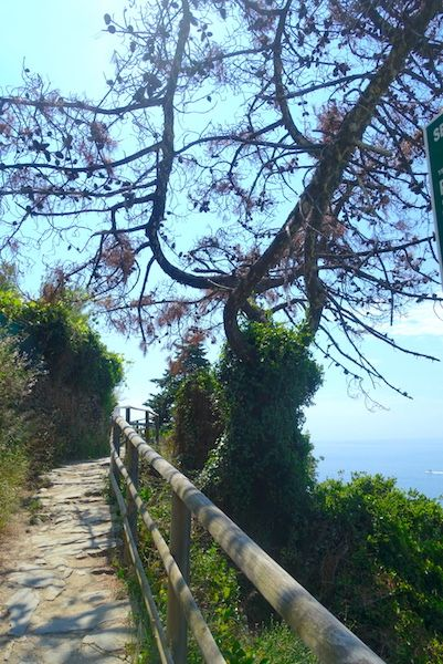 trail-vernazza-to-corniglia-c